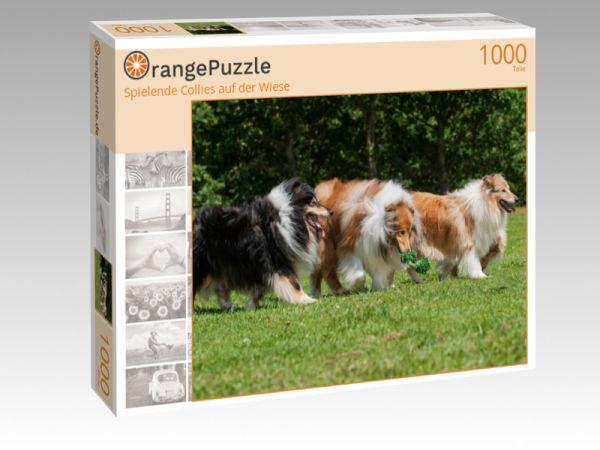 """Puzzle Motiv """"Spielende Collies auf der Wiese"""" - Puzzle-Schachtel zu 1000 Teile Puzzle"""