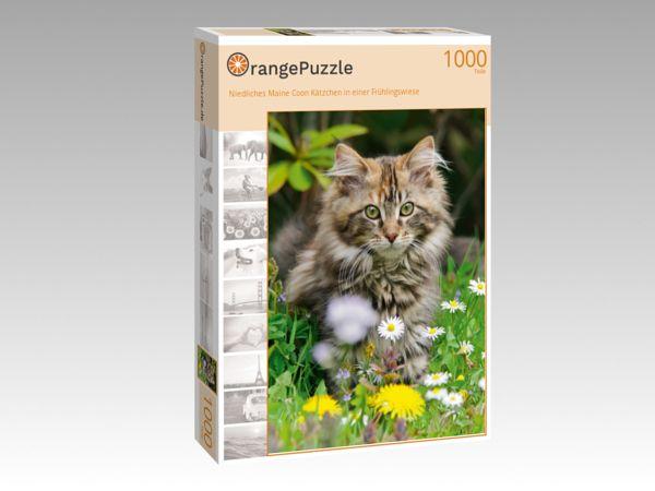 """Puzzle Motiv """"Niedliches Maine Coon Kätzchen in einer Frühlingswiese"""" - Puzzle-Schachtel zu 1000 Teile Puzzle"""