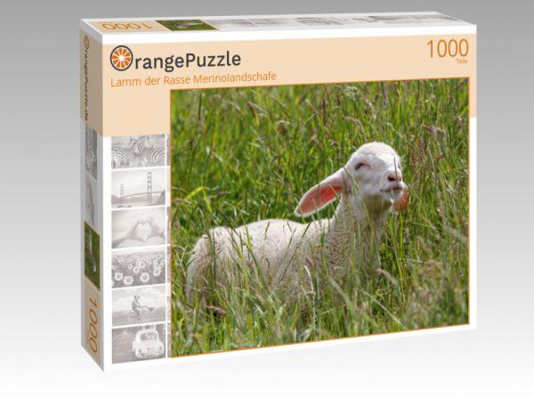 """Puzzle Motiv """"Lamm der Rasse Merinolandschafe"""" - Puzzle-Schachtel zu 1000 Teile Puzzle"""