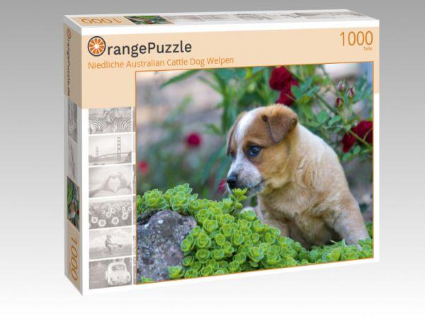 """Puzzle Motiv """"Niedliche Australian Cattle Dog Welpen"""" - Puzzle-Schachtel zu 1000 Teile Puzzle"""