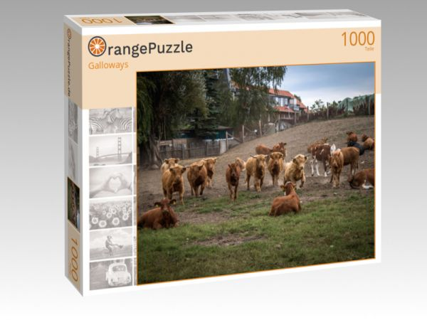 """Puzzle Motiv """"Galloways"""" - Puzzle-Schachtel zu 1000 Teile Puzzle"""