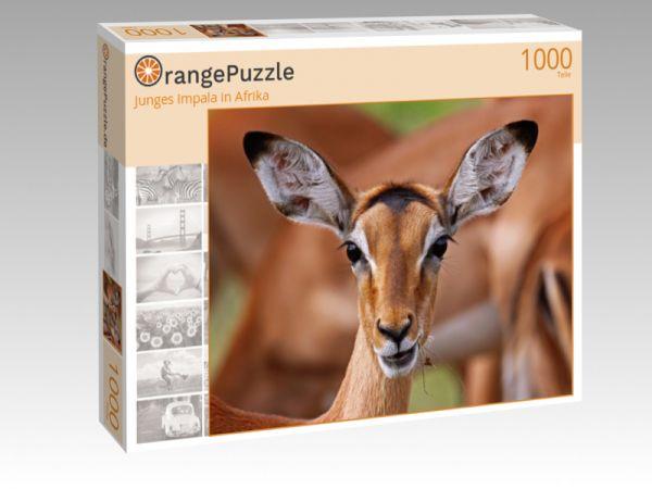 """Puzzle Motiv """"Junges Impala in Afrika"""" - Puzzle-Schachtel zu 1000 Teile Puzzle"""