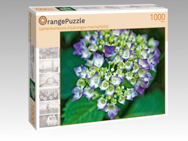 """Puzzle Motiv """"Gartenhortensie (Hydrangea macrophylla)"""" - Puzzle-Schachtel zu 1000 Teile Puzzle"""