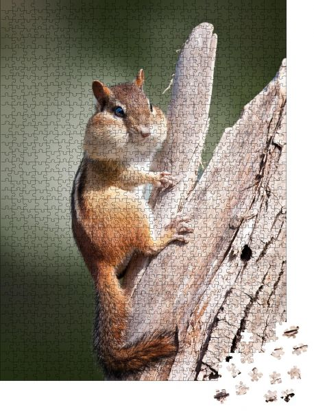 """Puzzle-Motiv """"Puffy Cheek Streifenhörnchen"""" - Puzzle-Teile zu 1000 Teile Puzzle"""