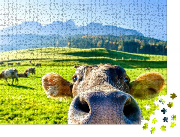 "Puzzle-Motiv ""Lustige Kuh am Kaisergebirge Berg"" - Puzzle-Schachtel zu 1000 Teile Puzzle"