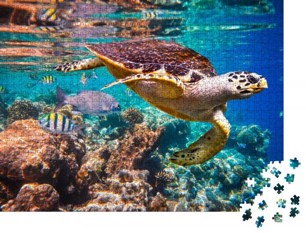 """Puzzle-Motiv """"Karettschildkröte - Eretmochelys imbricata schwimmt unter Wasser"""" - Puzzle-Teile zu 1000 Teile Puzzle"""