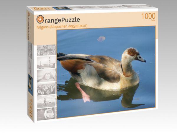 """Puzzle Motiv """"Nilgans (Alopochen aegyptiacus)"""" - Puzzle-Schachtel zu 1000 Teile Puzzle"""