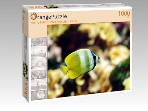 """Puzzle Motiv """"Klein's Falterfisch (Chaetodon kleinii)"""" - Puzzle-Schachtel zu 1000 Teile Puzzle"""