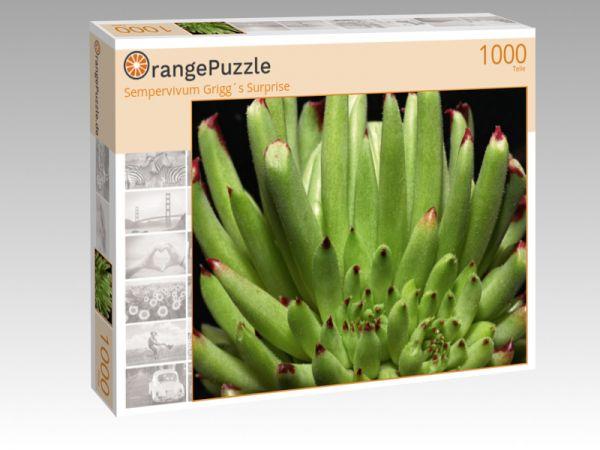 """Puzzle Motiv """"Sempervivum Grigg´s Surprise"""" - Puzzle-Schachtel zu 1000 Teile Puzzle"""
