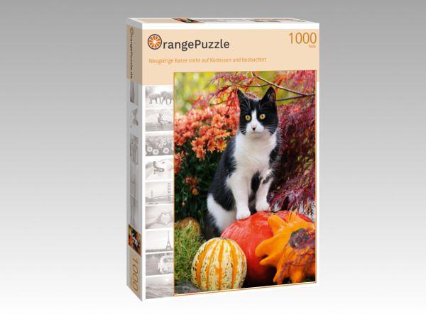 """Puzzle Motiv """"Neugierige Katze steht auf Kürbissen und beobachtet"""" - Puzzle-Schachtel zu 1000 Teile Puzzle"""
