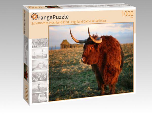 """Puzzle Motiv """"Schottisches Hochland Rind - Highland Cattle in Caithness"""" - Puzzle-Schachtel zu 1000 Teile Puzzle"""