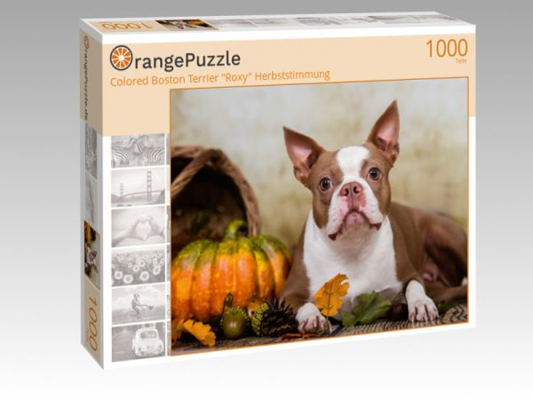 """Puzzle Motiv """"Colored Boston Terrier """"Roxy"""" Herbststimmung"""" - Puzzle-Schachtel zu 1000 Teile Puzzle"""