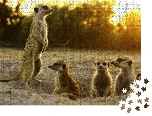 """Puzzle-Motiv """"Erdmännchen das lustigste Tier. Namibia Wildlife"""" - Puzzle-Teile zu 1000 Teile Puzzle"""