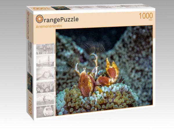 """Puzzle Motiv """"Anemonenkrebs"""" - Puzzle-Schachtel zu 1000 Teile Puzzle"""