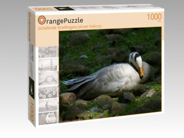 """Puzzle Motiv """"Schlafende Streifengans (Anser indicus)"""" - Puzzle-Schachtel zu 1000 Teile Puzzle"""