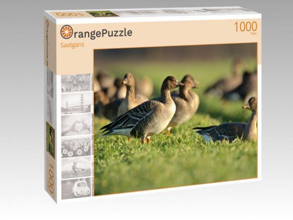 """Puzzle Motiv """"Saatgans"""" - Puzzle-Schachtel zu 1000 Teile Puzzle"""