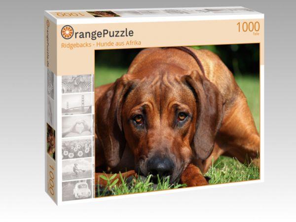 "Puzzle Motiv ""Ridgebacks - Hunde aus Afrika"" - Puzzle-Schachtel zu 1000 Teile Puzzle"