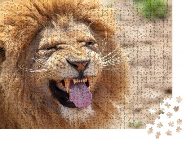 """Puzzle-Motiv """"Löwe zieht ein lustiges Gesicht Tierzunge und Eckzähne"""" - Puzzle-Teile zu 1000 Teile Puzzle"""