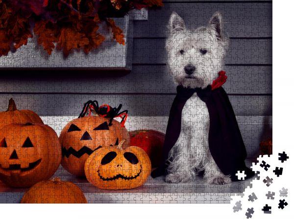"""Puzzle-Motiv """"Lustiger West Highland weißer Terrier Hund im gruseligen Halloween Kostüm und schwarzem Dracula-Mantel"""" - Puzzle-Teile zu 1000 Teile Puzzle"""