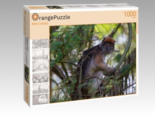 """Puzzle Motiv """"Red Colobo"""" - Puzzle-Schachtel zu 1000 Teile Puzzle"""