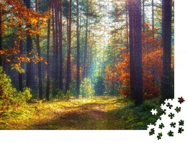 """Puzzle-Motiv """"Herbstliche Naturlandschaft Sonniger Herbstwald Wunderschöne bunte Bäume im Wald"""" - Puzzle-Teile zu 1000 Teile Puzzle"""