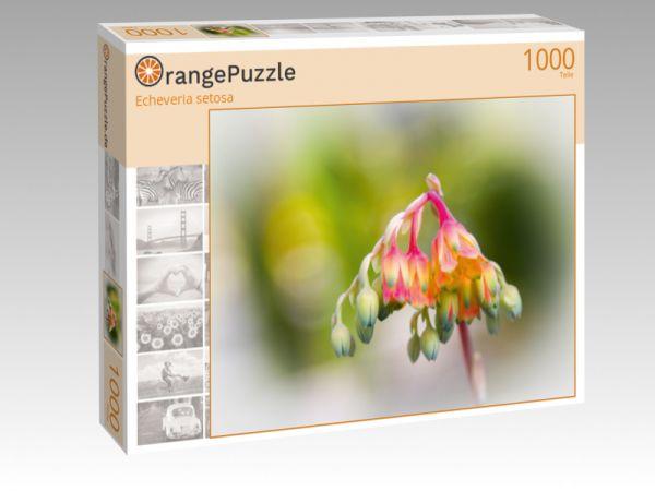 """Puzzle Motiv """"Echeveria setosa"""" - Puzzle-Schachtel zu 1000 Teile Puzzle"""