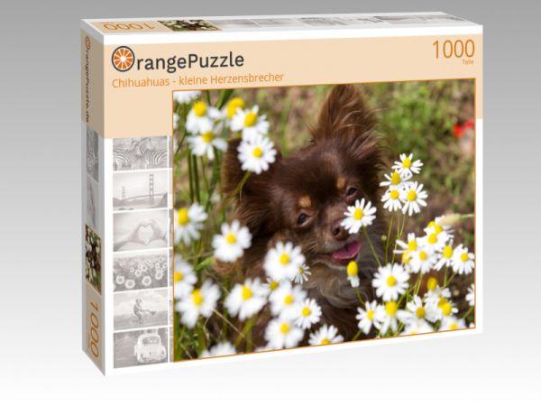 """Puzzle Motiv """"Chihuahuas - kleine Herzensbrecher"""" - Puzzle-Schachtel zu 1000 Teile Puzzle"""