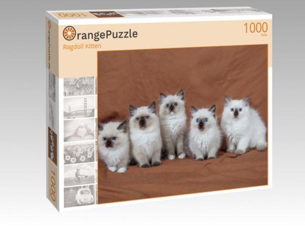 """Puzzle Motiv """"Ragdoll Kitten"""" - Puzzle-Schachtel zu 1000 Teile Puzzle"""