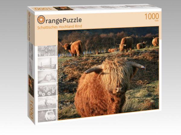 """Puzzle Motiv """"Schottisches Hochland Rind"""" - Puzzle-Schachtel zu 1000 Teile Puzzle"""