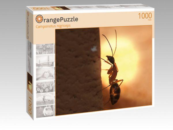 "Puzzle Motiv ""Camponotus nigriceps"" - Puzzle-Schachtel zu 1000 Teile Puzzle"