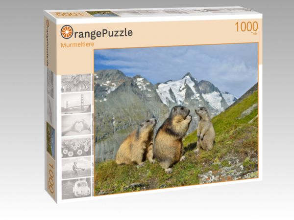 """Puzzle Motiv """"Murmeltiere"""" - Puzzle-Schachtel zu 1000 Teile Puzzle"""