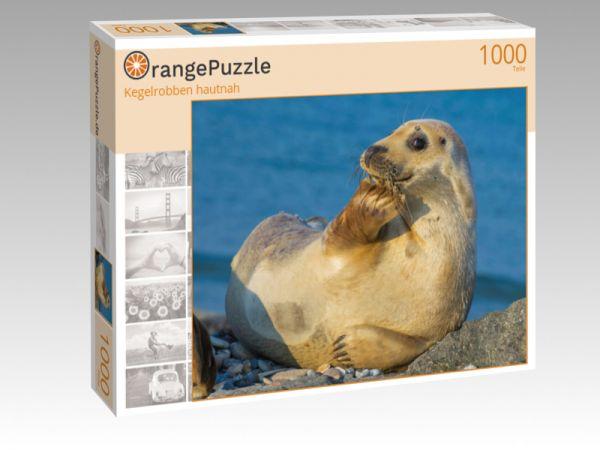 """Puzzle Motiv """"Kegelrobben hautnah"""" - Puzzle-Schachtel zu 1000 Teile Puzzle"""
