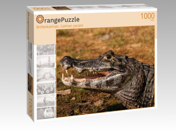 "Puzzle Motiv ""Brillenkaiman, Caiman yacare"" - Puzzle-Schachtel zu 1000 Teile Puzzle"