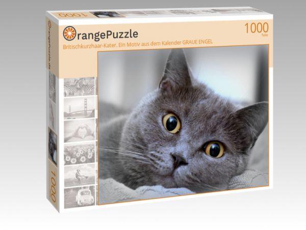 """Puzzle Motiv """"Britischkurzhaar-Kater. Ein Motiv aus dem Kalender GRAUE ENGEL"""" - Puzzle-Schachtel zu 1000 Teile Puzzle"""