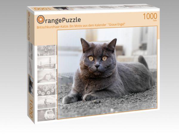 """Puzzle Motiv """"Britischkurzhaar-Katze. Ein Motiv aus dem Kalender`""""Graue Engel"""""""" - Puzzle-Schachtel zu 1000 Teile Puzzle"""
