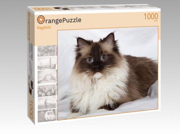 """Puzzle Motiv """"Ragdolls"""" - Puzzle-Schachtel zu 1000 Teile Puzzle"""