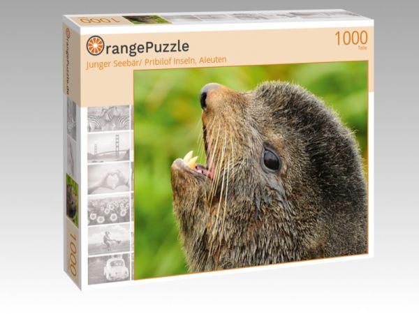 """Puzzle Motiv """"Junger Seebär/ Pribilof Inseln, Aleuten"""" - Puzzle-Schachtel zu 1000 Teile Puzzle"""