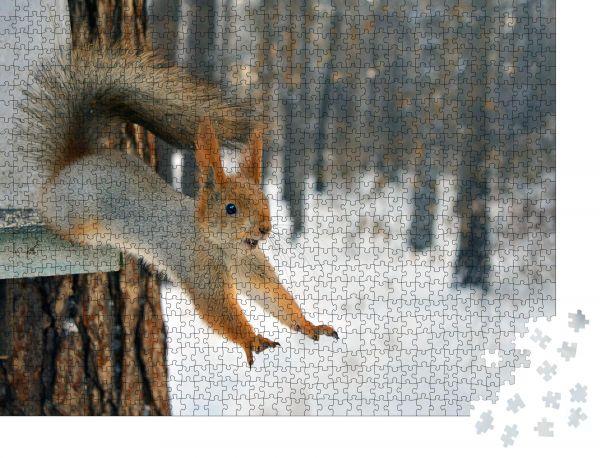 """Puzzle-Motiv """"rotes Eichhörnchen springt vom Baum"""" - Puzzle-Teile zu 1000 Teile Puzzle"""