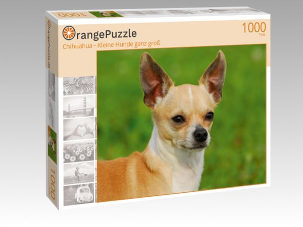"""Puzzle Motiv """"Chihuahua - Kleine Hunde ganz groß"""" - Puzzle-Schachtel zu 1000 Teile Puzzle"""