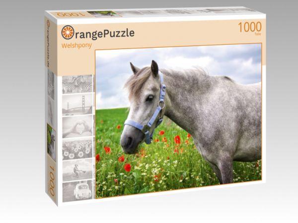 """Puzzle Motiv """"Welshpony"""" - Puzzle-Schachtel zu 1000 Teile Puzzle"""