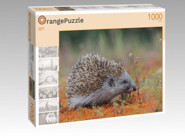 """Puzzle Motiv """"Igel"""" - Puzzle-Schachtel zu 1000 Teile Puzzle"""