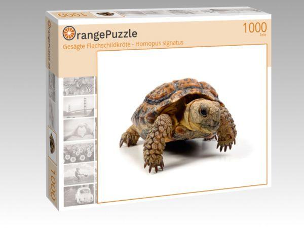 """Puzzle Motiv """"Gesägte Flachschildkröte - Homopus signatus"""" - Puzzle-Schachtel zu 1000 Teile Puzzle"""