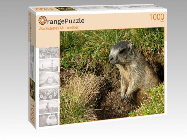 """Puzzle Motiv """"Wachsames Murmeltier"""" - Puzzle-Schachtel zu 1000 Teile Puzzle"""