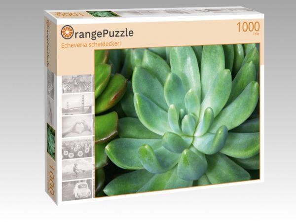 """Puzzle Motiv """"Echeveria scheideckeri"""" - Puzzle-Schachtel zu 1000 Teile Puzzle"""