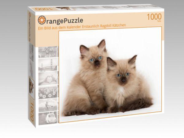 """Puzzle Motiv """"Ein Bild aus dem Kalender Erstaunlich Ragdoll Kätzchen"""" - Puzzle-Schachtel zu 1000 Teile Puzzle"""