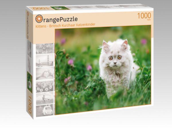 """Puzzle Motiv """"Kittens - Britisch Kurzhaar Katzenkinder"""" - Puzzle-Schachtel zu 1000 Teile Puzzle"""