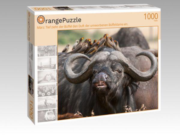 """Puzzle Motiv """"März: Tief zieht der Büffel den Duft der umworbenen Büffeldame ein."""" - Puzzle-Schachtel zu 1000 Teile Puzzle"""