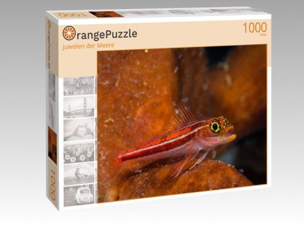 "Puzzle Motiv ""Juwelen der Meere"" - Puzzle-Schachtel zu 1000 Teile Puzzle"