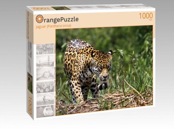 """Puzzle Motiv """"Jaguar (Panthera onca)"""" - Puzzle-Schachtel zu 1000 Teile Puzzle"""