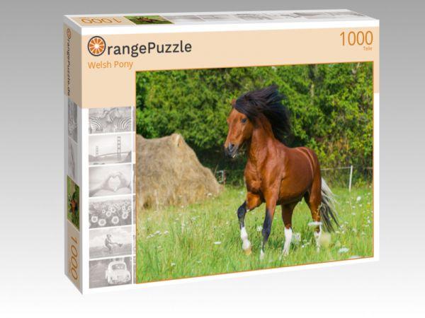 """Puzzle Motiv """"Welsh Pony"""" - Puzzle-Schachtel zu 1000 Teile Puzzle"""
